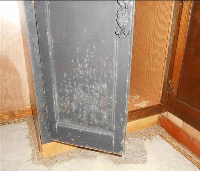 Mold Covered Cabinet