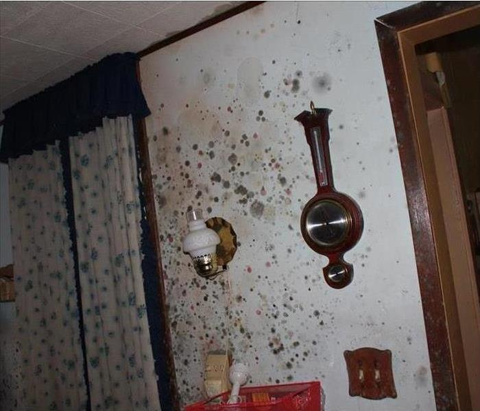 Mold Growth on Your Walls